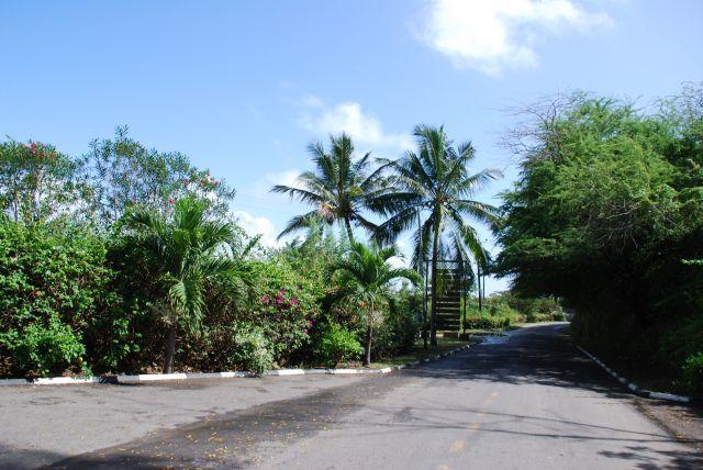 Zdjęcia: Teren przy Holelu Palm , Coral Beach, Wybrzeże, Widoczek 2, KENIA