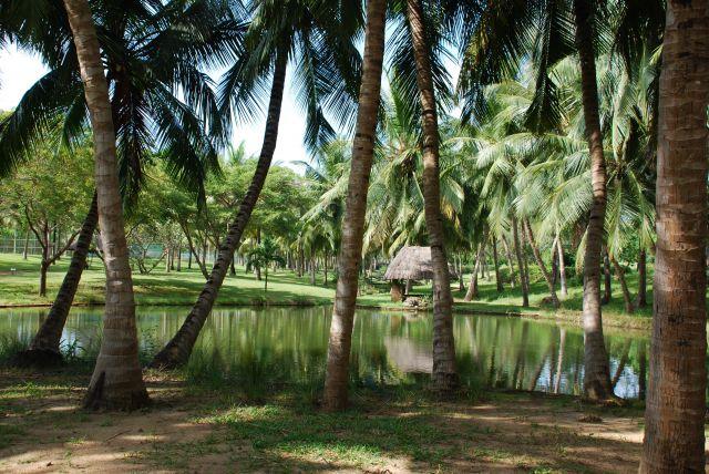 Zdjęcia: Coral Palm Beach, Wybrzeże, ..., KENIA