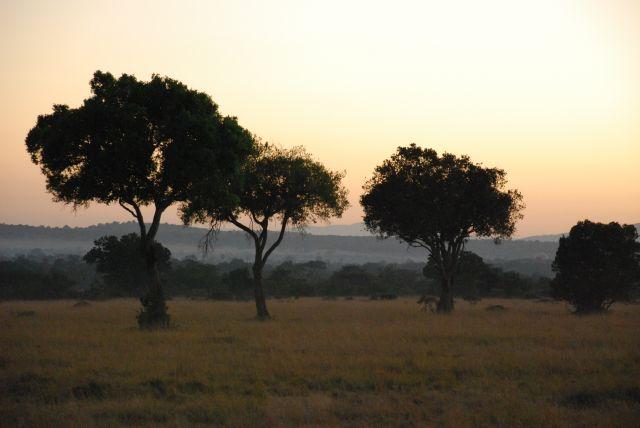 Zdjęcia: Safari Masai Mara, Masai Mara, WSCHÓD SŁOŃCA NA SAFARI, KENIA