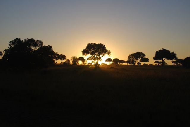 Zdjęcia: SAFARI MASAI MARA, MASAI MARA, Wschód słońca 3, KENIA