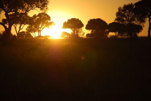 Zdjęcia: SAFARI MASAI MARA, MASAI MARA, Wschód słońca 5, KENIA