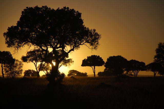 Zdjęcia: SAFARI MASAI MARA, MASAI MARA, Wschód słońca 6, KENIA