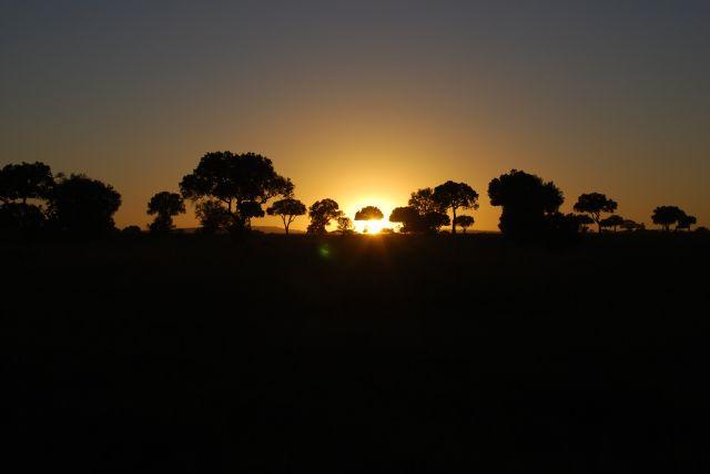 Zdjęcia: SAFARI MASAI MARA, MASAI MARA, Wschód słońca 7, KENIA