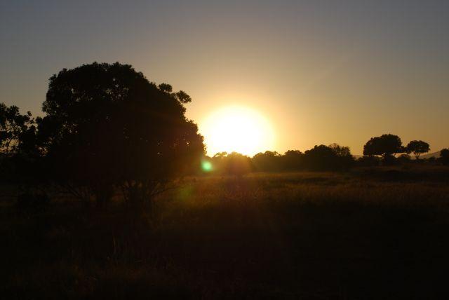 Zdjęcia: SAFARI MASAI MARA, MASAI MARA, Wschód słońca 8, KENIA