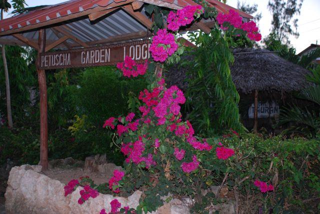 Zdjęcia: Wybrzeże, OKOLICE MOMBASY, Roślinność ozdobna, KENIA