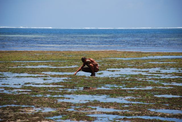 Zdjęcia: Wybrzeże, OKOLICE MOMBASY, NA SPACERZE PODCZAS ODPŁYWU, KENIA