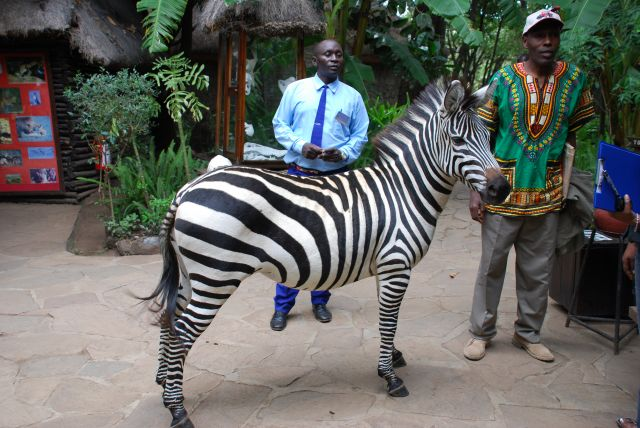 Zdjęcia: SAFARI, Masai Mara, Częściowo oswojona, KENIA