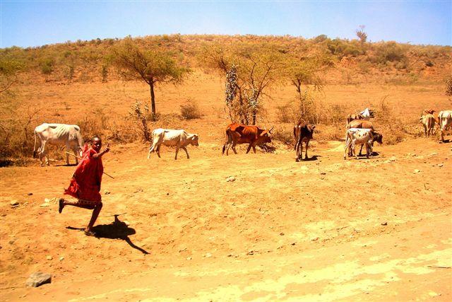 Zdjęcia: MASAI MARA, ZIEMIA MASAJÓW, ZIEMIA MASAJÓW, KENIA