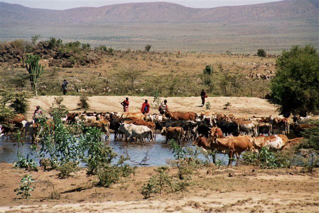 Zdj�cia: MASAI MARA, ZIEMIA MASAJ�W, KENIA