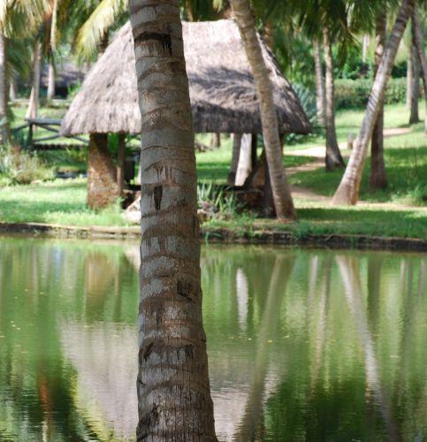 Zdjęcia: okolice Mombasy, Okolice Mombasy, Teren należący do Hotelu Shanzu, KENIA