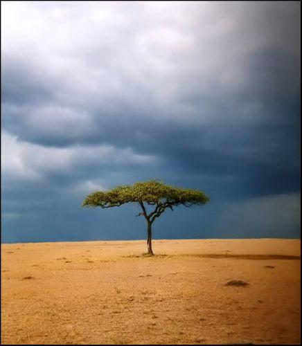 Zdjęcia: gdzies na sawannie, Masai Mara, Samotne drzewo, KENIA