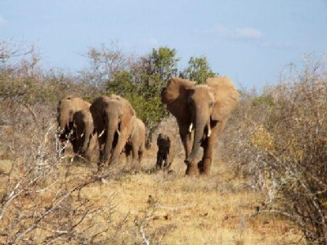 Zdjęcia: w drodze do Lugards Falls, Park Narodowy Tsavo East, chyba trzeba zacząć się bać, KENIA