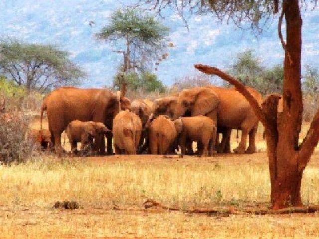 Zdjęcia: Rhino Sanctuary, Park Narodowy Tsavo West, zebranie, KENIA