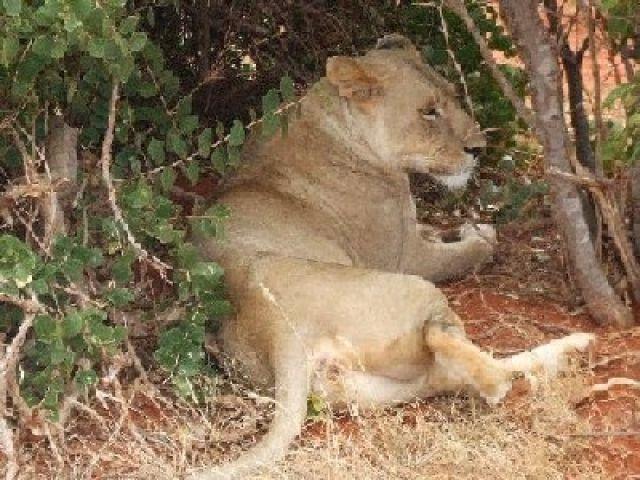 Zdjęcia: w drodze do Ndololo Camp, Park Narodowy Tsavo East, sjesta, KENIA