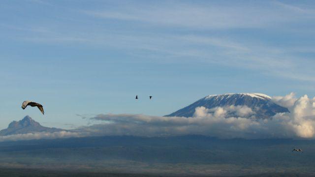 Zdjęcia: Amboseli, południowa Kenia na granicy z Tanzania , Kilimandżaro, KENIA