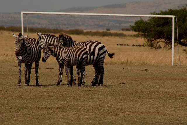 Zdjęcia: Masai Mara, Masai Mara, bianco-neri gola !!!, KENIA
