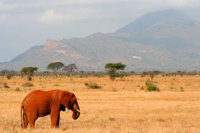 Zdj�cia: Kenia, Czerwony S�o� z Tsavo, KENIA