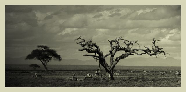 Zdjęcia: sawanna, Amboseli, ***, KENIA