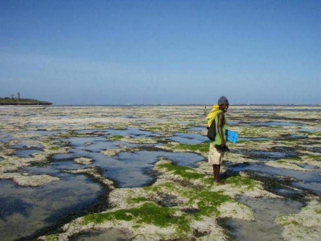 Zdjęcia: Kikambala, Mombasa, kolor żółty tu nie pasuje, KENIA