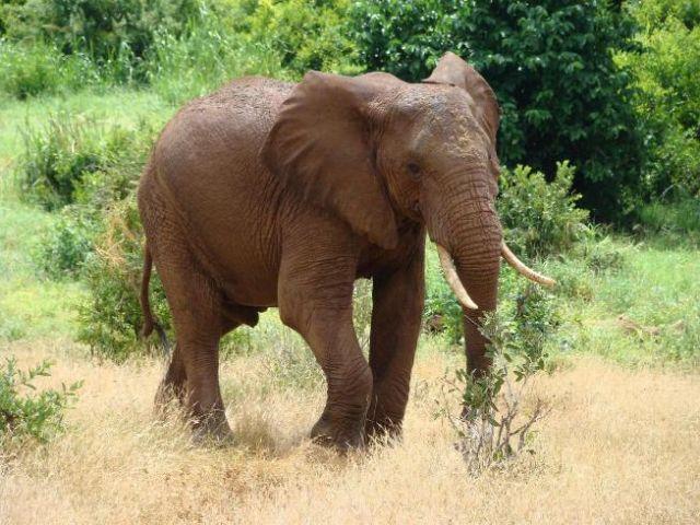 Zdjęcia: Tsavo East, Tsavo, po prostu słoń, KENIA