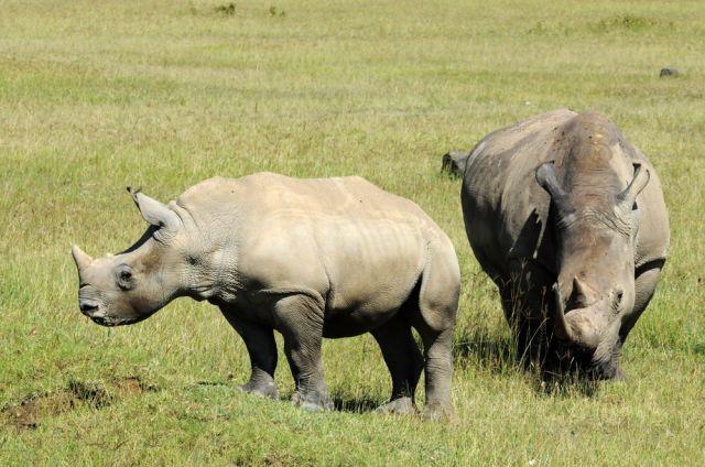 Zdjęcia: sawanna, Nakuru, ***, KENIA