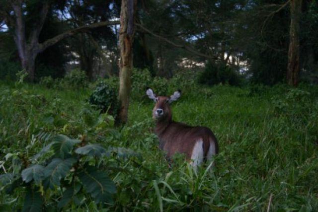 Zdjęcia: park, Park Nakuru, Zwierząt nie widziałeś?, KENIA