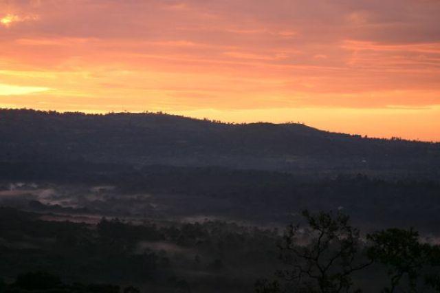 Zdjęcia: Kakamega - las deszczowy, Kakamega, Las deszczowy, KENIA