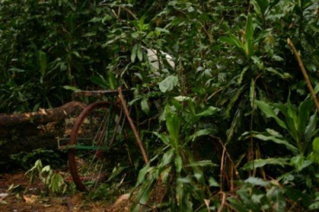 Zdj�cia: Kakamega - las deszczowy, Kakamega, Parking w d�ungli, KENIA