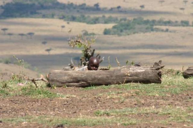 Zdjęcia: Masai Mara, Masai Mara, Bezpieczna inwigilacja białych, KENIA
