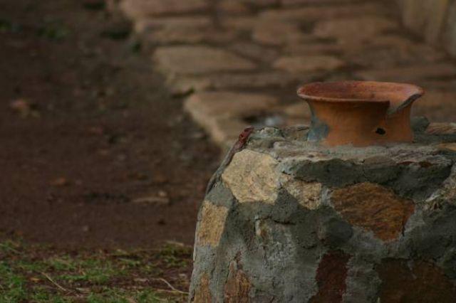 Zdjęcia: Masai Mara, Masai Mara, Test na spostrzegawczość - szukaj jaszczurki:), KENIA