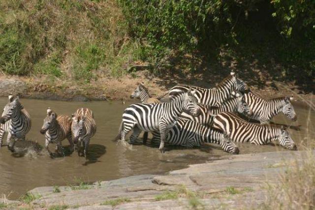 Zdjęcia: Masai Mara, Masai Mara, Poidełko, KENIA
