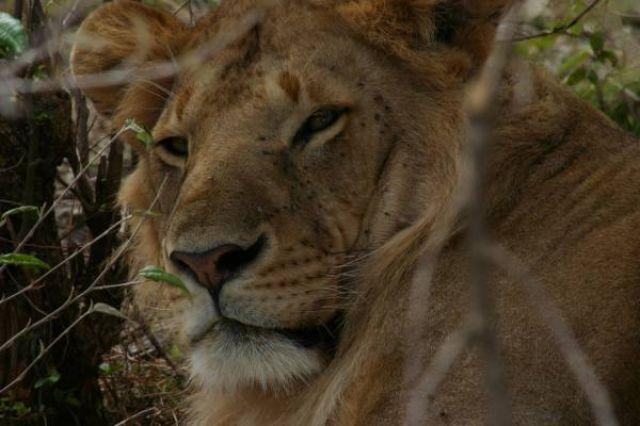 Zdjęcia: Masai Mara, Masai Mara, czego?, KENIA