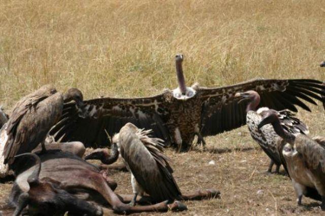 Zdjęcia: Masai Mara, Masai Mara, Oto ja, KENIA