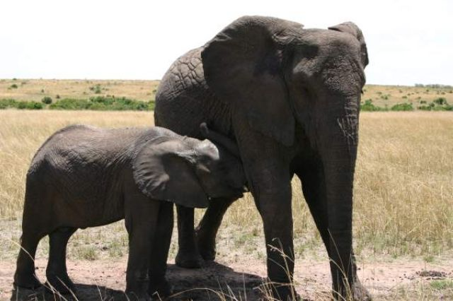 Zdj�cia: Masai Mara, Masai Mara, Ma�e co nieco, KENIA