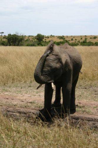 Zdjęcia: Masai Mara, Masai Mara, Maseczka błotna, KENIA