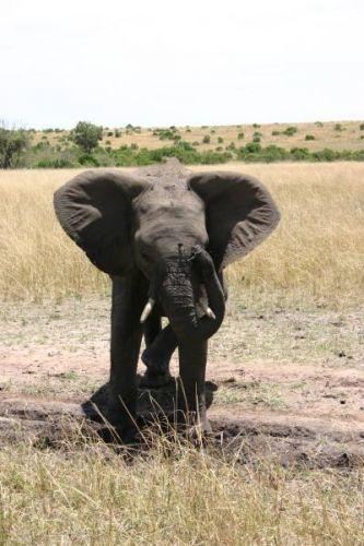 Zdjęcia: Masai Mara, Masai Mara, Jestem gość, KENIA