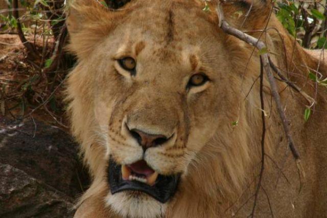 Zdjęcia: Masai Mara, Masai Mara, Czyż nie  jestem wrażliwa?, KENIA