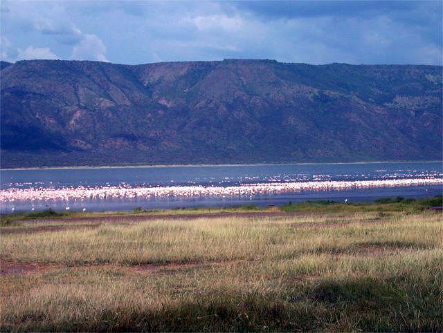 Zdjęcia: Jeziora Bogoria, flamingi, KENIA