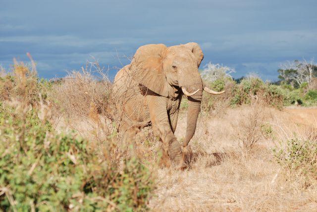Zdjęcia: Tsavo Est, Safari, KENIA