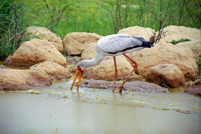 Zdjęcia: Jezioro Baringo, iestety to nie był bocian, KENIA