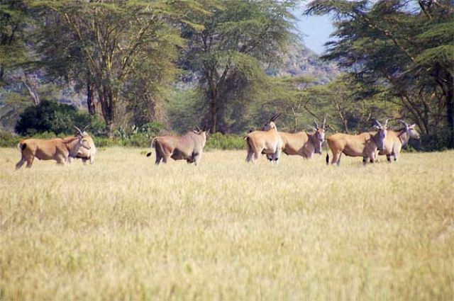 Zdjęcia: Green Lake Crater, Kudu, KENIA