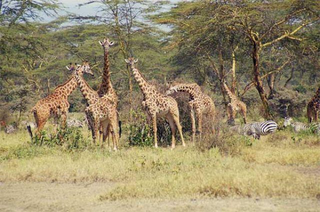 Zdjęcia: Green Lake Crater, piesze safarii w środkowej Kenii, KENIA