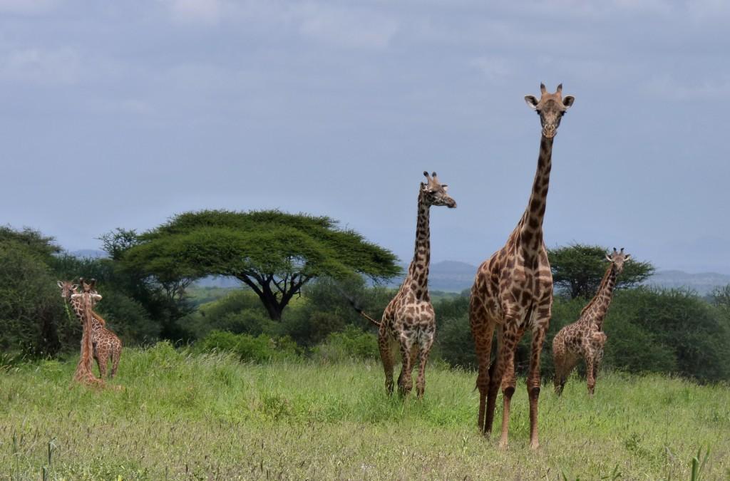Zdjęcia: ., ..., ,, KENIA