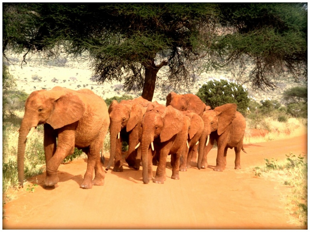 Zdjęcia: Park Narodowy Tsavo, Rodzinka , KENIA