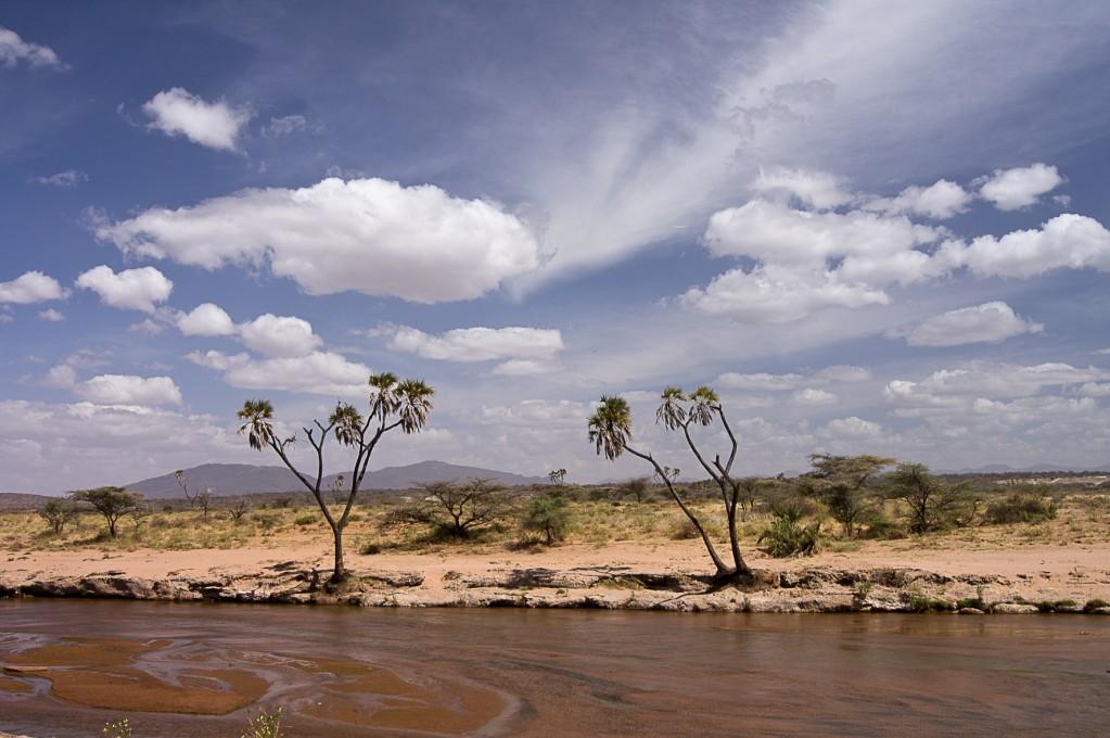Zdjęcia: NP Samburu, NP Samburu, Kolory Afryki, KENIA