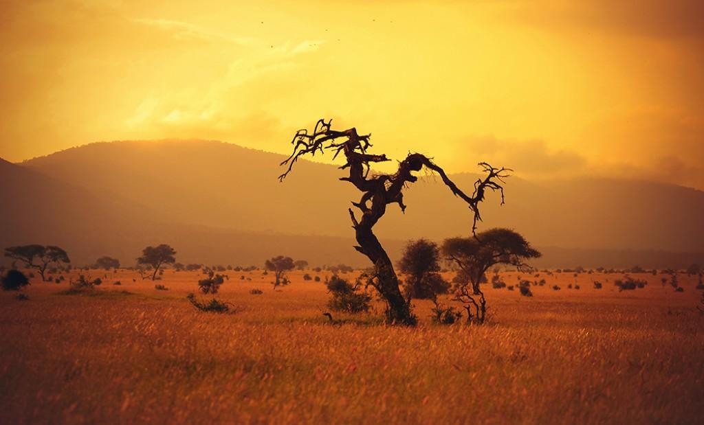 Zdjęcia: Tsavo West, Kenia, Strażnik, KENIA