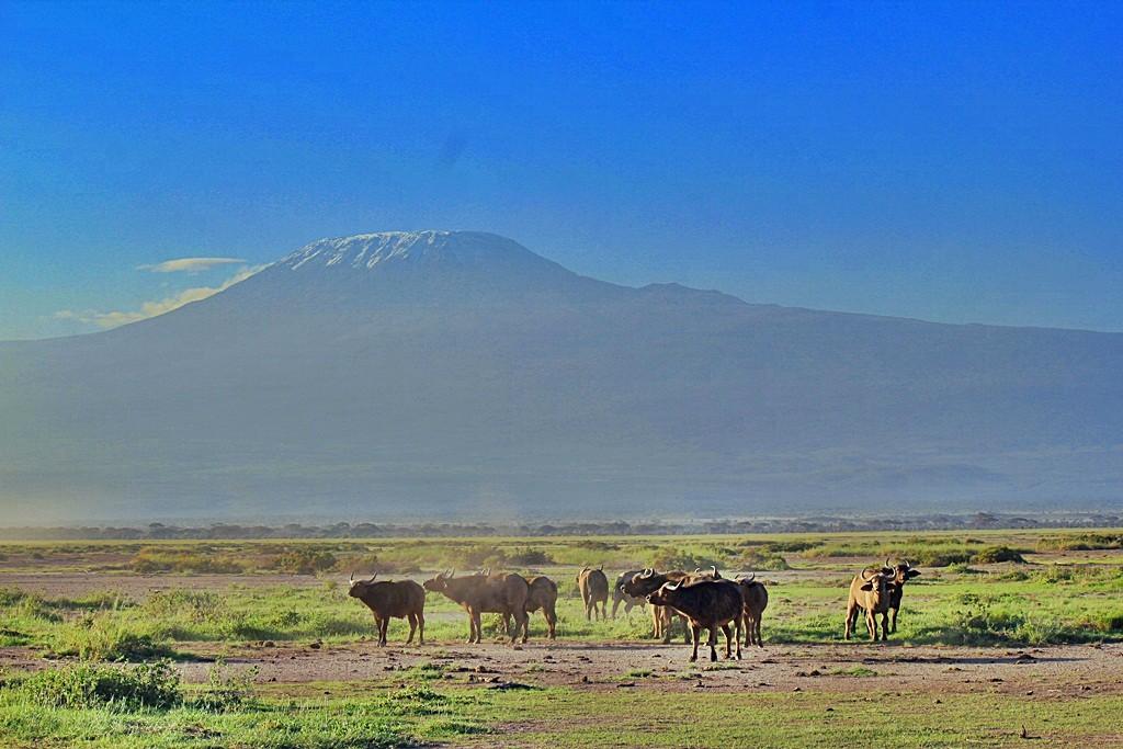 Zdjęcia: jw, Park Narodowy, Kilimandżaro o świcie, KENIA