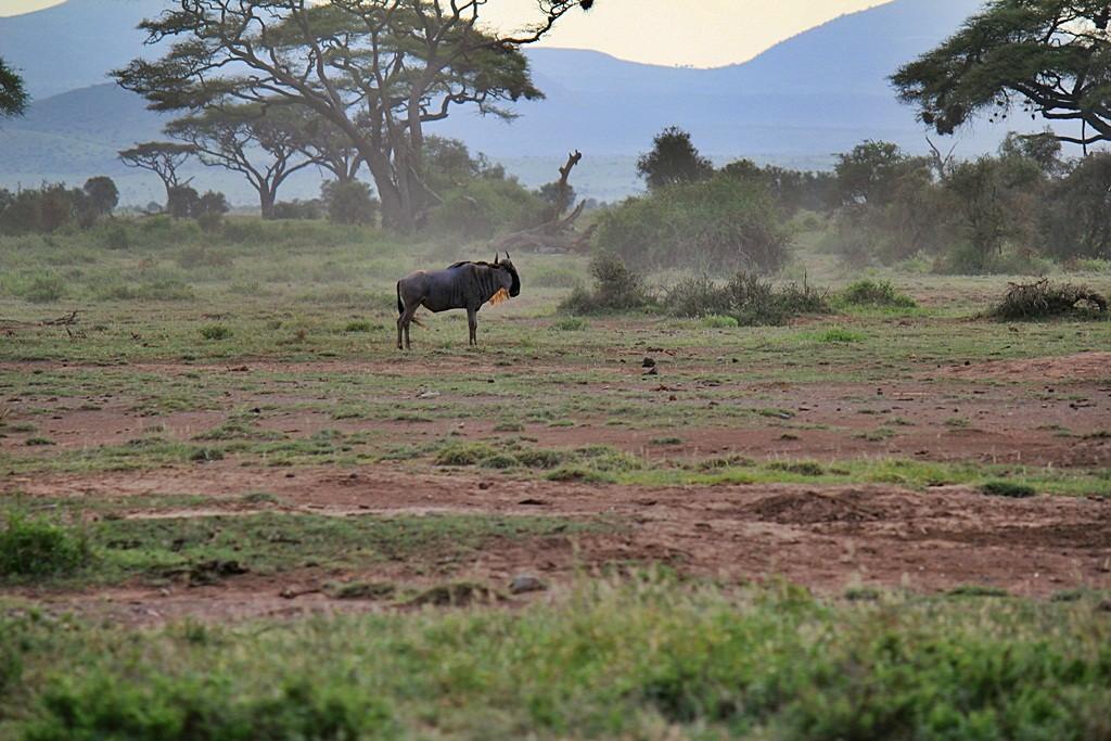 Zdjęcia: ., Park Narodowy, Samotnik, KENIA