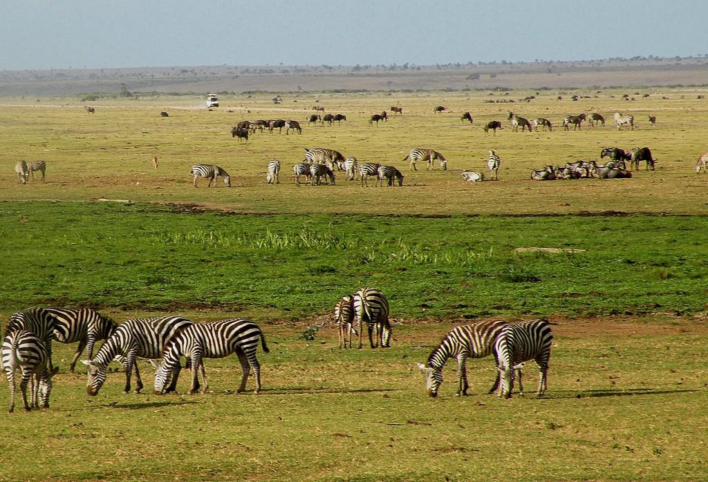 Zdjęcia: Amboseli, płd Kenia, Safari, KENIA