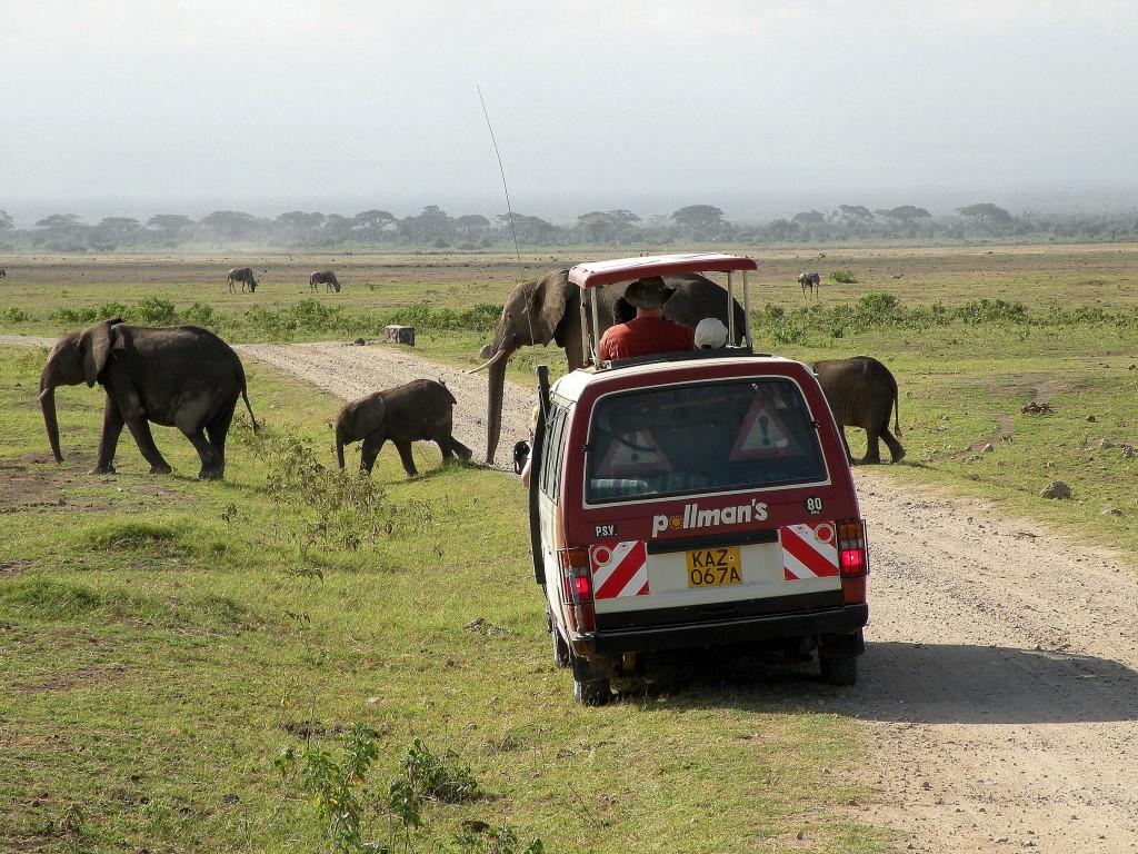 Zdjęcia: Amboseli, płd Kenia, Przejscie dla pieszych, KENIA